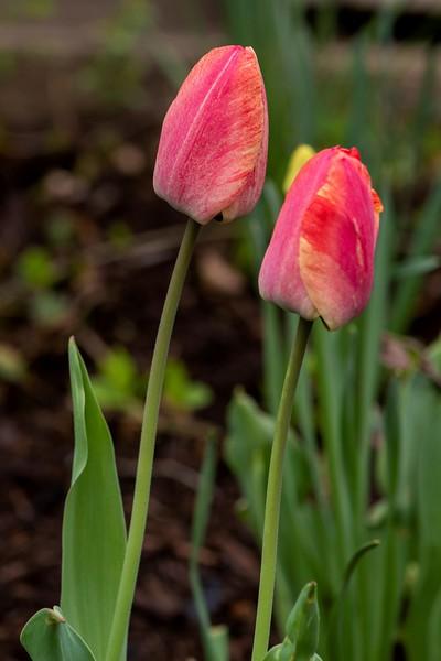 Garden 1, 064.jpg