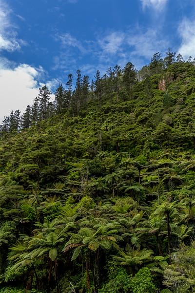 Auf dem Weg durch die Karangahake Gorge