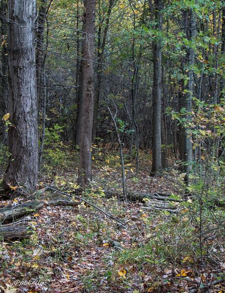 trails 102216-1.jpg