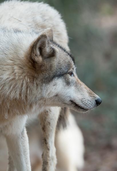 Seacrest Wolves_-19.jpg