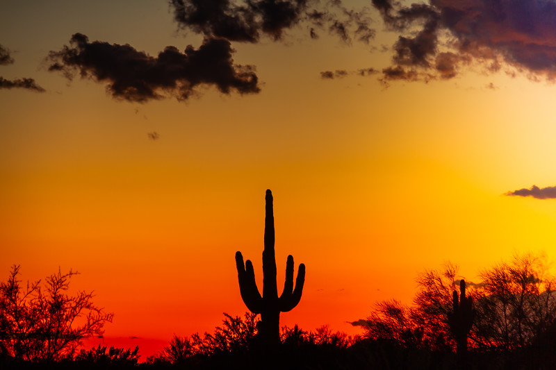 A saguaro cactus silhouetted against the glowing red sky of the sunset