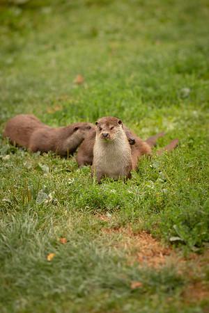 2020 - Otters 003