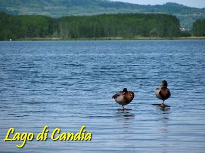 Lago di Candia MTB 5-2010