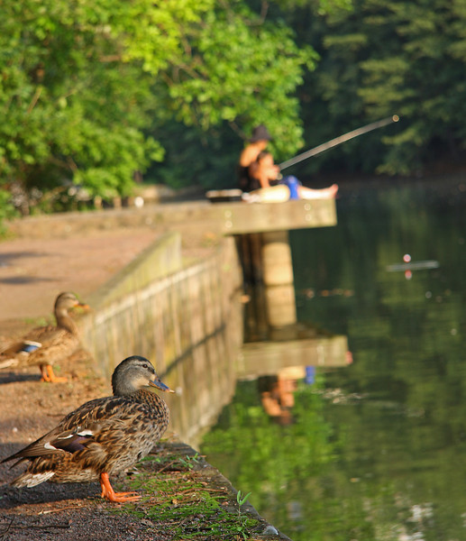 Morning Fishing Final 9x7_3153 c.jpg