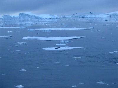 Antarctica January 2006