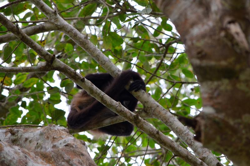 Wild monkeys nearby.