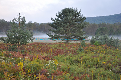 """""""Resident Photographer"""" at Canaan Valley National Wildlife Refuge"""