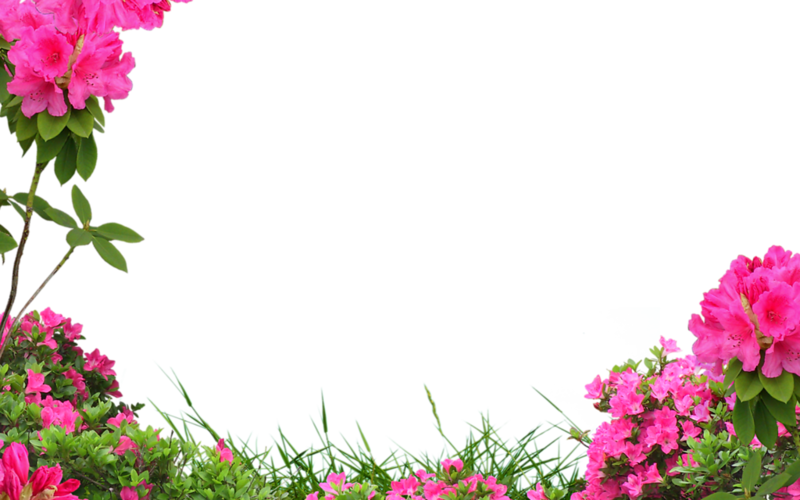 Flower 16.png