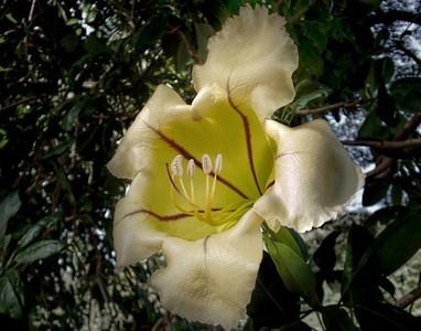 Hawaii - Flowers