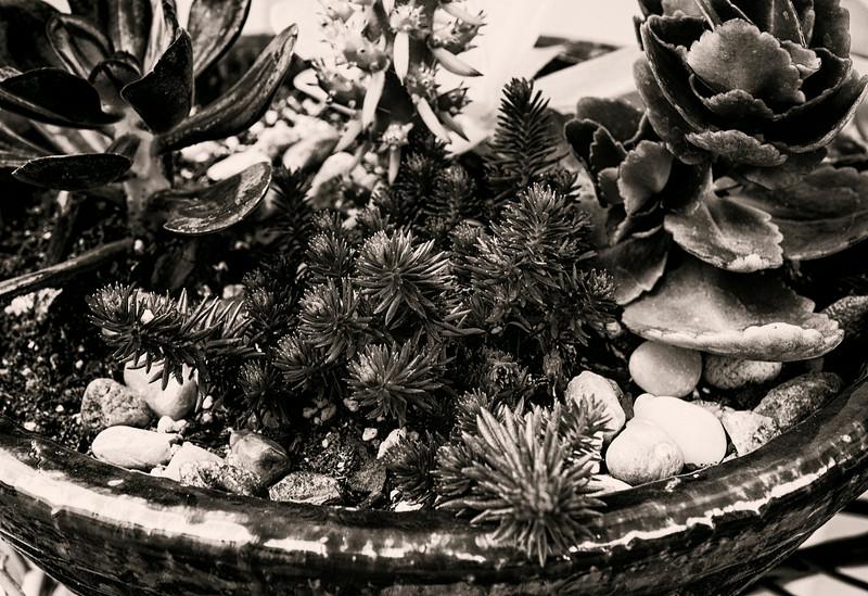 succulents 0704-2.jpg