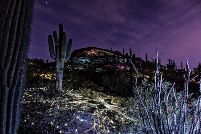 Desert Botanical Garden, Bruce Munro Sonoran Light