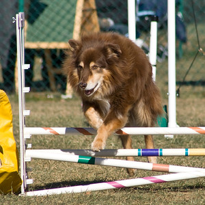 Beck Gallery Dog Agility
