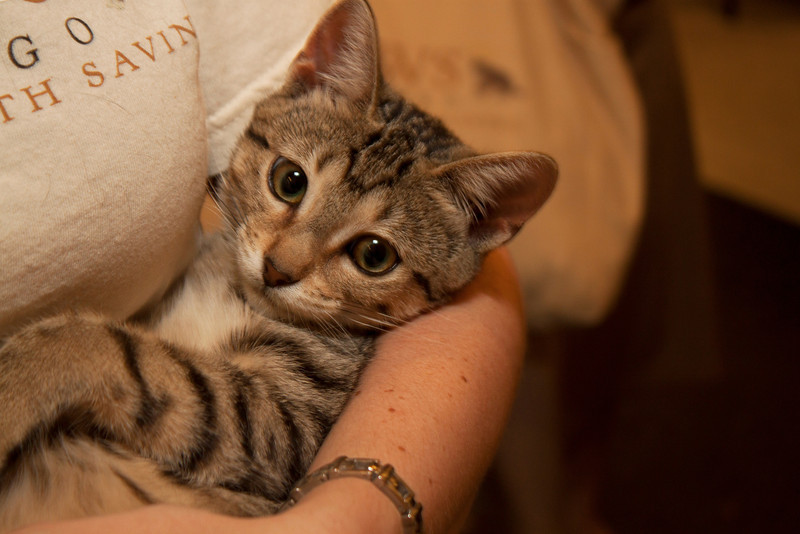 Kitten 3 (20120826-023).jpg