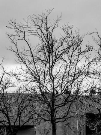 2014-02-28 - Rainy Day