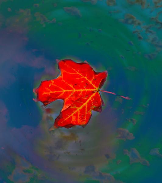 Leaf-6610 2.jpg