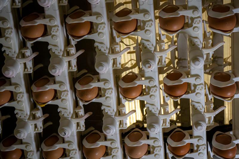 Eggs 17.jpg