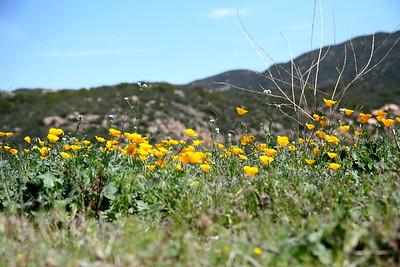 Warner Springs Flowers