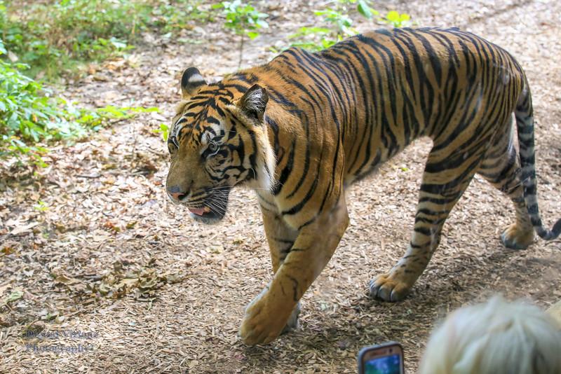 2016-07-17 Fort Wayne Zoo 594LR.jpg