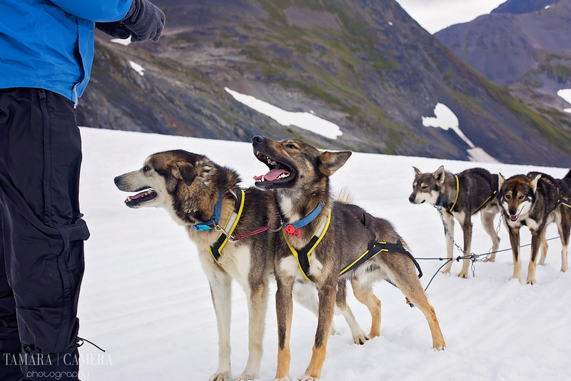 DogSledding2-10-2.jpg