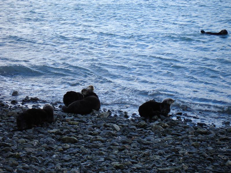 Alaska 2008 099.jpg