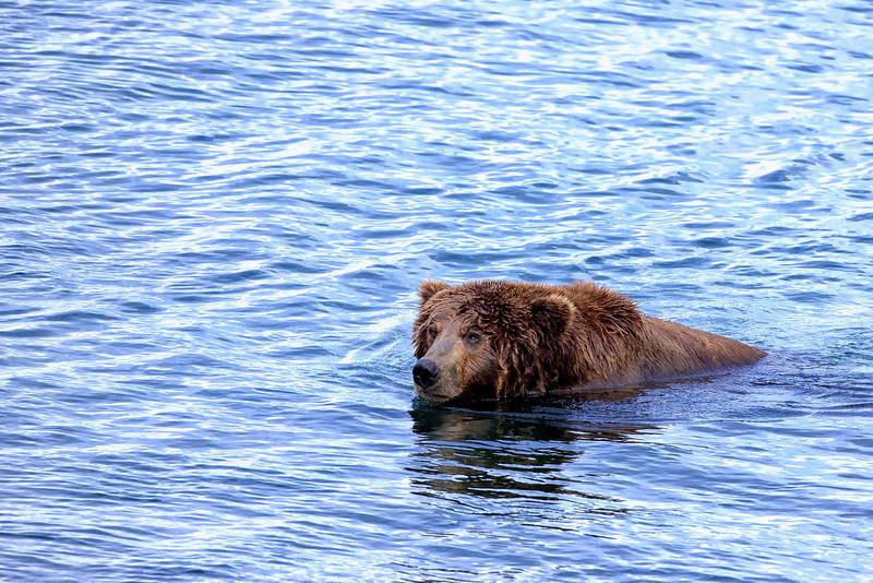 Alaska_2013_FH0T5346.jpg