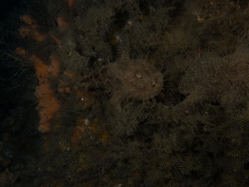 Reef BHB 2016-7080191.jpg
