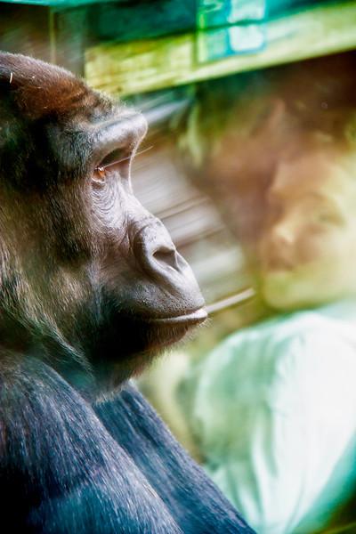 Animals_190.jpg