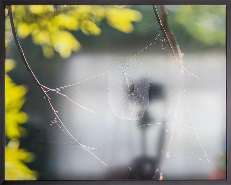 Spider Web print with non-glare glass