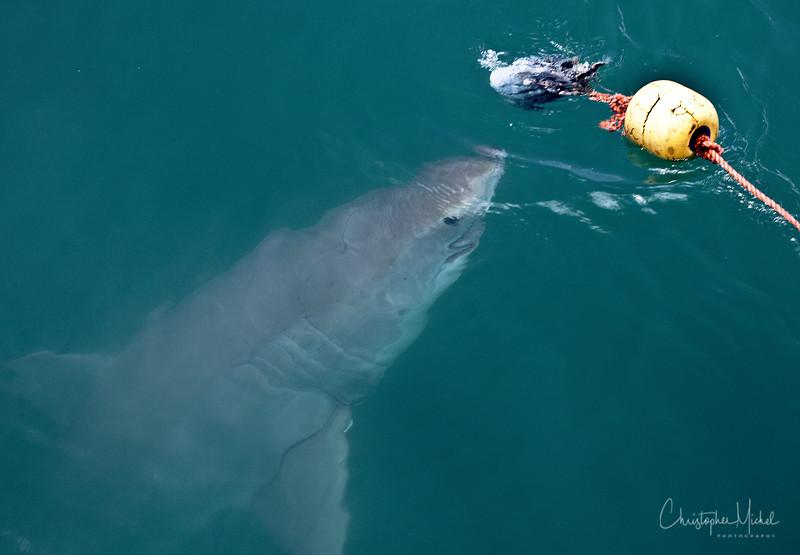 010209_shark dive_7603