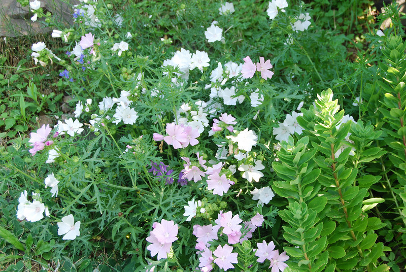 Flowers - 04