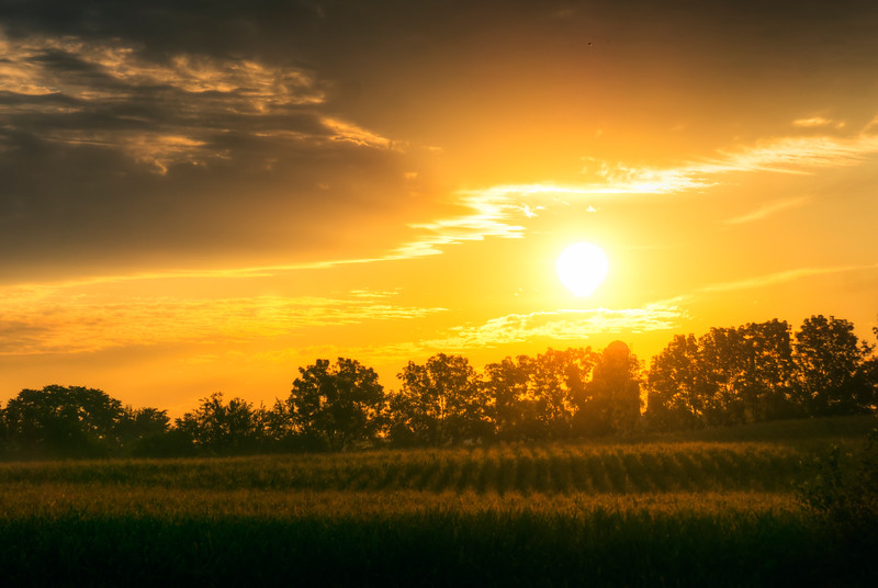sunrise - sun on the corn (p).jpg