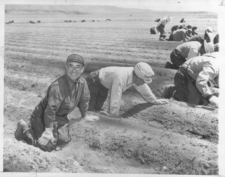 """""""The Onions Must Be Weeded -- 'Stoop' labor weeds a field of onions at the Tule Lake, California, Japanese relocation center"""" -- caption on photograph"""