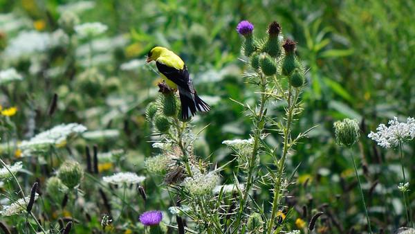 Iroquois Wildlife Reserve