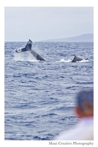 WhaleTales_2014_472.jpg