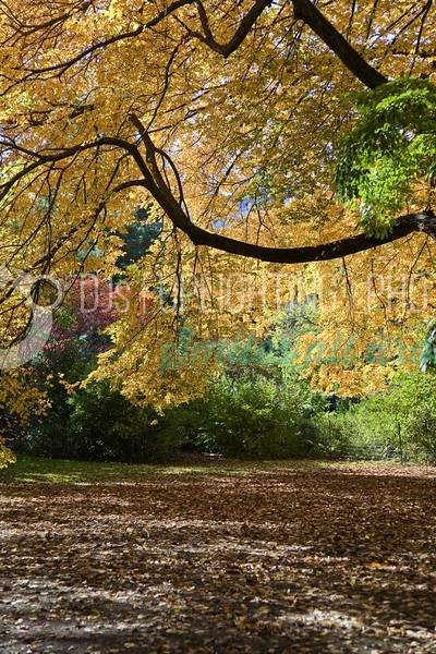 Autumn-Tree_batch_batch.jpg