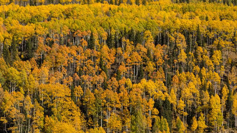 Colorado19_5D4-1550.jpg