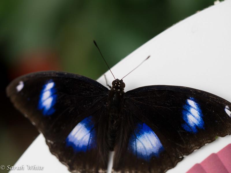 140503_ButterflyHouse_455.jpg