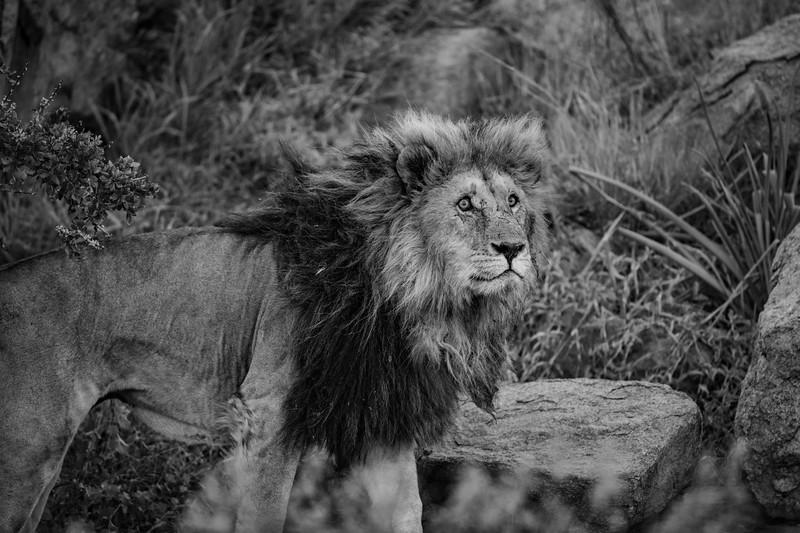 Tanzania_Feb_2018-648.jpg