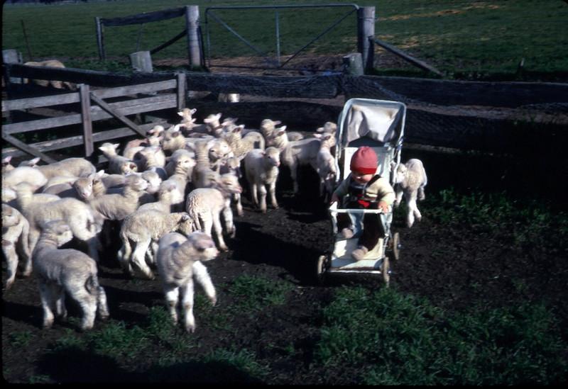 1970-6-13 (15) Andrew 10 mths, lamb marking time.jpg