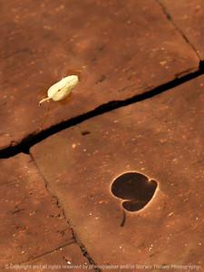 Floating Leaves Portfolio