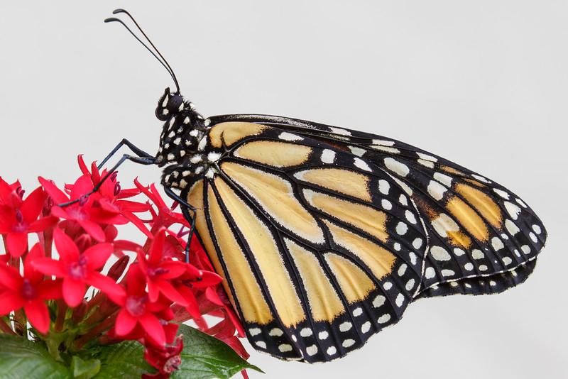 Monarch-8075.jpg