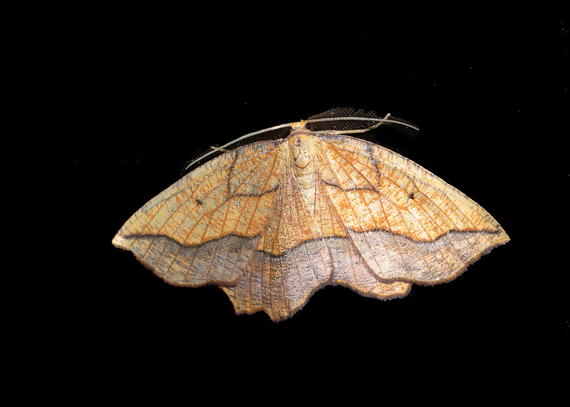 Bordered Beauty