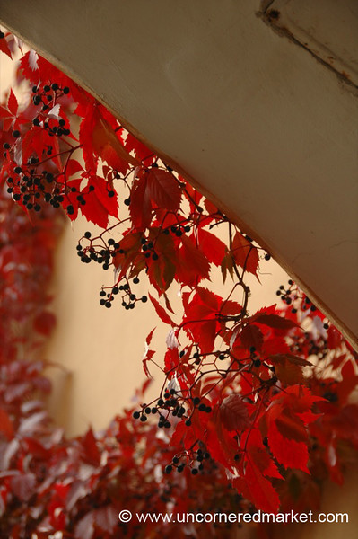 Autumn Leaves - Vilnius, Lithuania