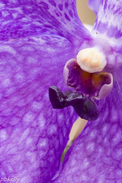 purple orchid 021614-1.jpg