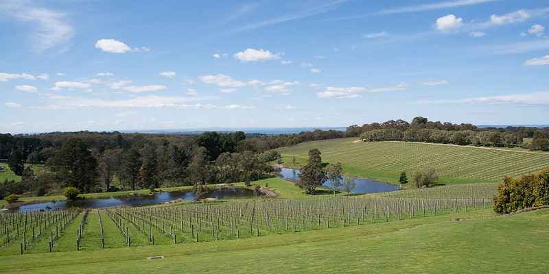 At the wineries and distilleries near Mornington