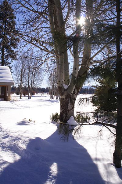 winter aspen tree lodge sunlight ktk IMG_1774 s.jpg