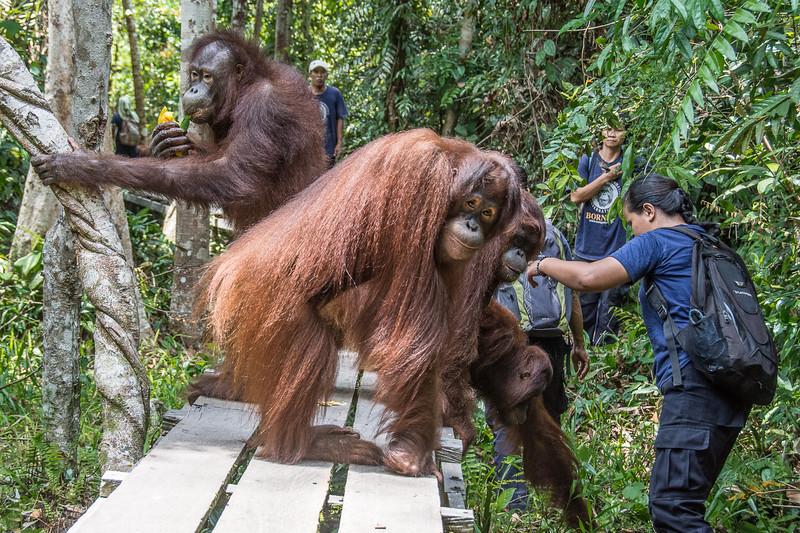 Borneo-2230.jpg