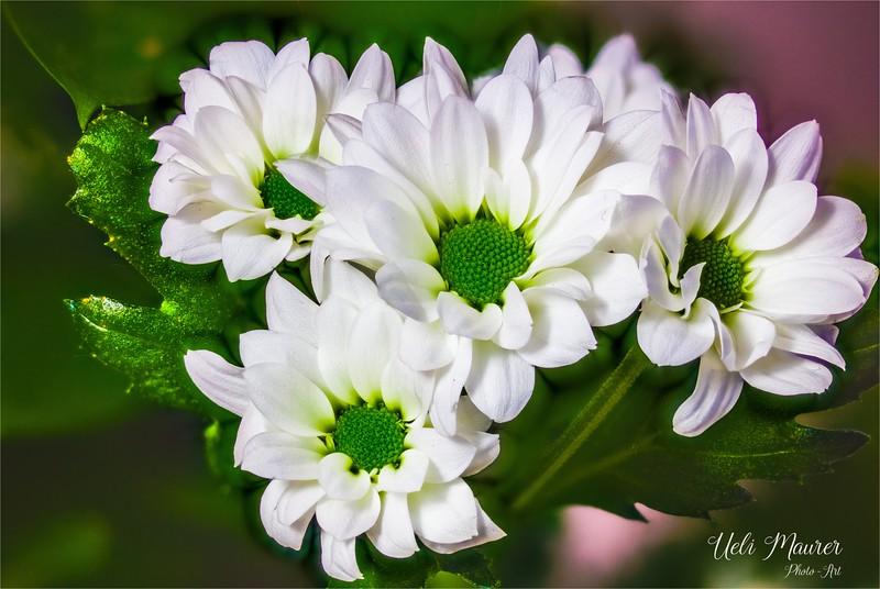 2017-12-22 Makro Blume - 0U5A2461 Stack C.jpg