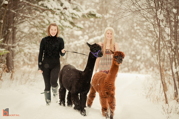 alpaca shoot - dec 2011