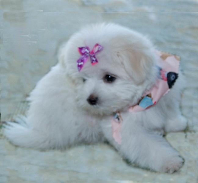 2011-1-4-Doggie-018.jpg